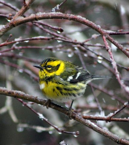 Bird_winter