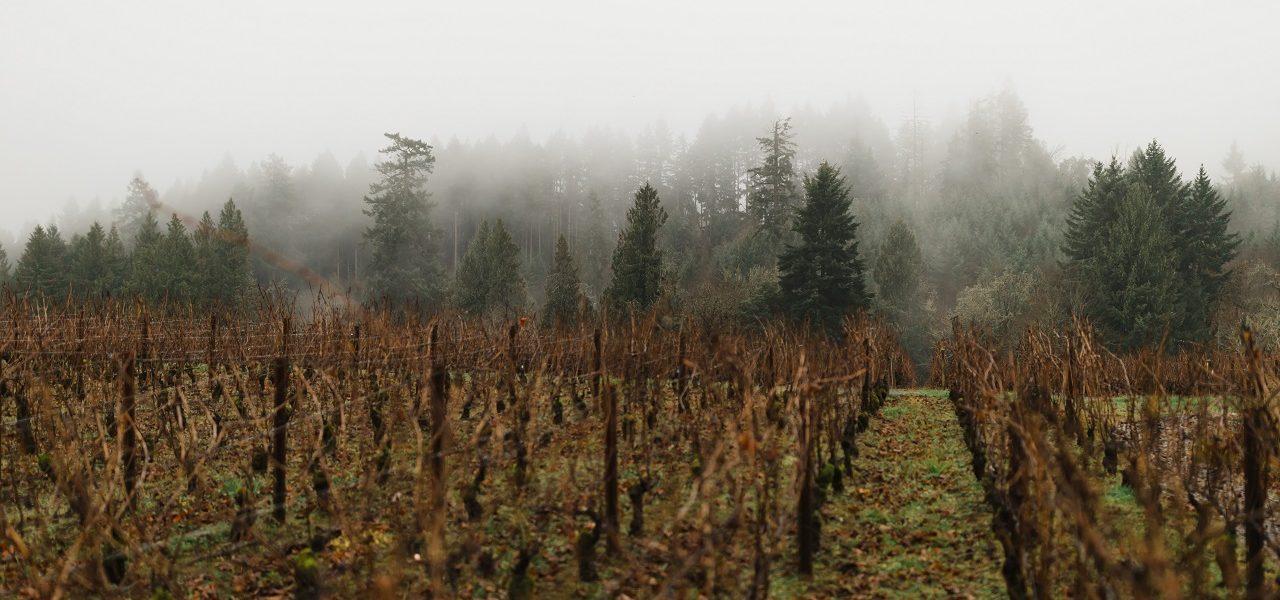 Ardiri Vineyard in the Winter