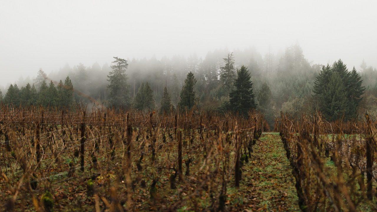 Ardiri Winery + OHS Happy HOWLidays