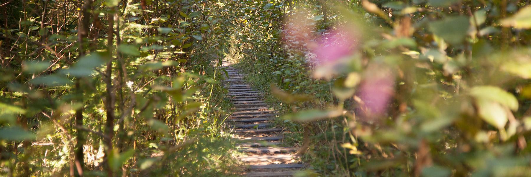 Salmonberry_Trail_