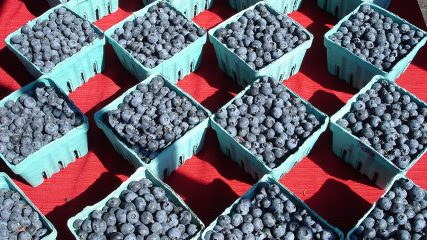 blueberries market