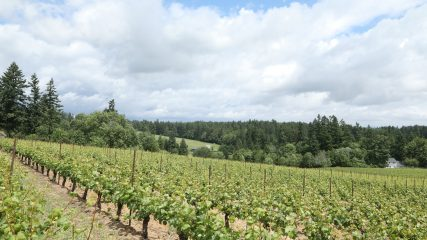 Wine Country is Ready for Bud Break