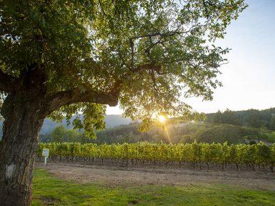 David Hill Vineyards & Winery 9970 Jim Shea