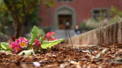 Fall leaves pacific university oregon