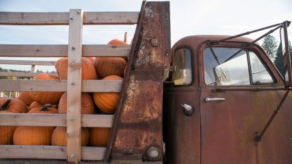 Pumpkins Fall truck Oregon Frierott