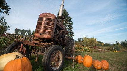 Pumpkins farm fall tractor oregon Frierott