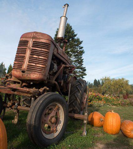 Pumpkins farm fall tractor oregon Frierott