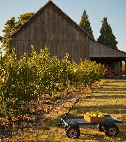 farm upick apples fall Spiker