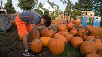 pumpkin patch fall oregon frierott