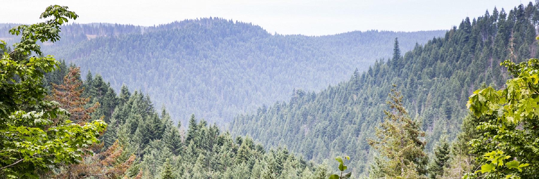 Tillamook_State_Forest_170806_WashCo_2035_Kochey