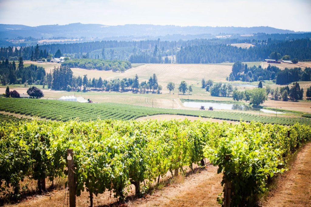 Overlooking the vineyards of Tualatin Valley