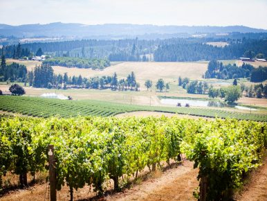 Unique Wine Varietals of Tualatin Valley