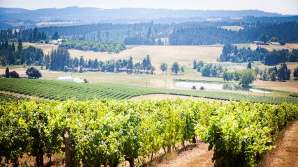 Unique Wine Varietals of Tualatin Valley